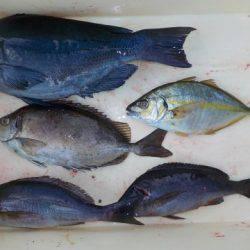大幸丸 釣果 | 徳島 | 釣果情報 堤防 ジギング 船釣 管理釣り場 釣り情報 | カンパリ全国版
