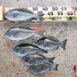 寿丸 釣果   長崎   釣果情報 堤防 ジギング 船釣 管理釣り場 釣り情報   カンパリ全国版