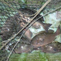 寿丸 釣果 | 長崎 | 釣果情報 堤防 ジギング 船釣 管理釣り場 釣り情報 | カンパリ全国版