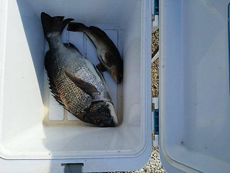 KO-SHIN丸 釣果 | 三重県 | 釣果情報 堤防 ジギング 船釣 管理釣り場 釣り情報 | カンパリ全国版