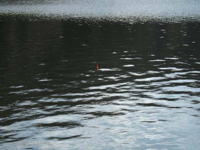 布目湖のワカサギ だんだん渋くなってる?