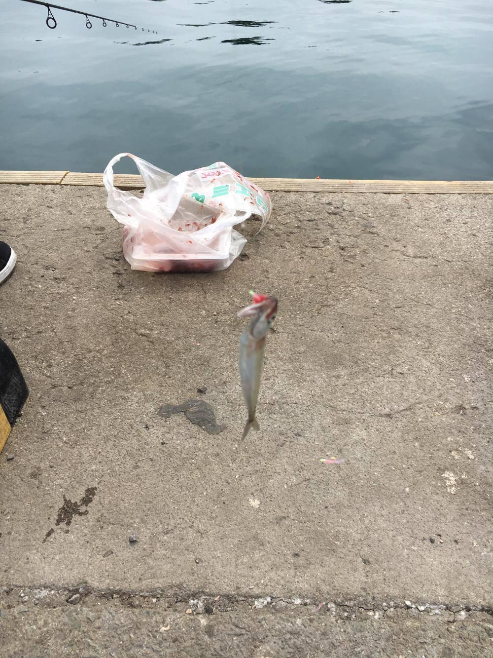 ゴールデンウィーク(GW)2018 和歌山でオススメの釣り