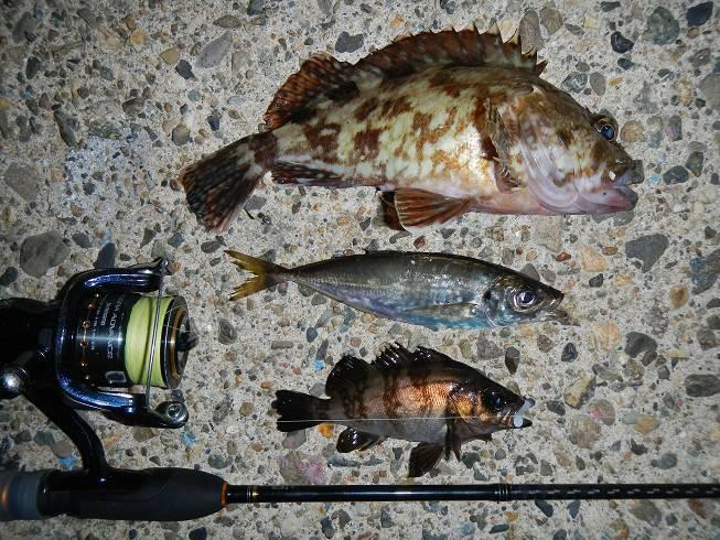 京都府の釣り ゴールデンウィーク(GW)にオススメ5月前半の釣り情報!②