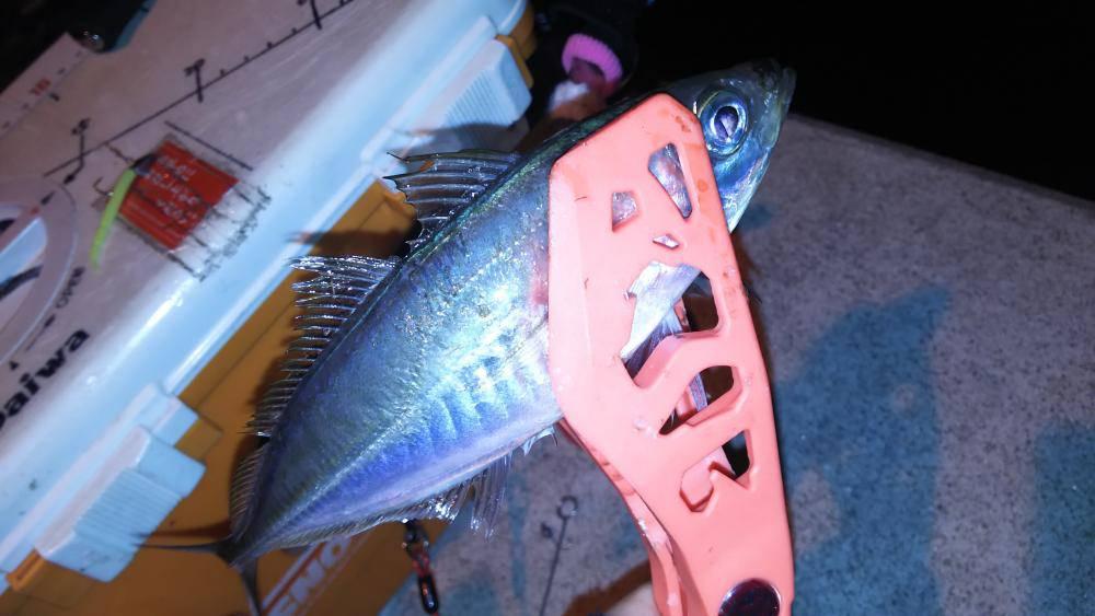 ゴールデンウィーク(GW)2018 大阪でオススメの釣り