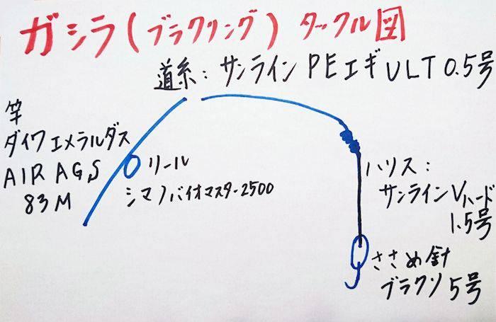アオリイカ浮き釣り 夏も以外と狙えるんです【角田裕介氏連載記事浮きアオリイカ釣り 第10弾】