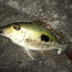 石垣島旅行 夕飯前にちょい釣り