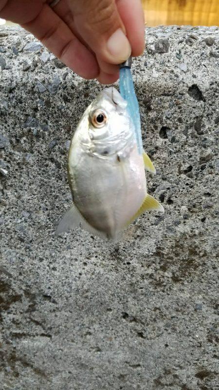 メッキ釣り(エバ)