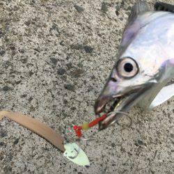 武庫一絶好釣