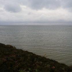 早朝の西表島で太刀魚とターポン