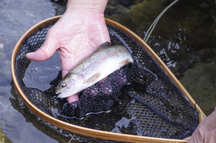 トラウトフィッシング〜管理釣り場編〜大自然の中ではじめよう!
