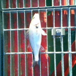 尼崎市立魚つり公園で