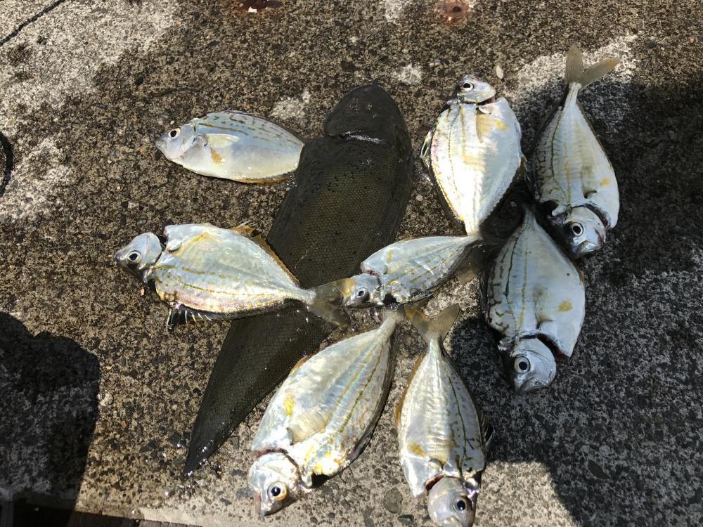 神奈川県の釣り 2017年前半のカンパリ投稿まとめ