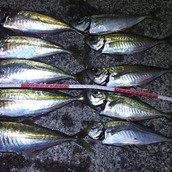 ゴールデンウィーク(GW)2018 鳥取でオススメの釣り