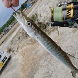 沖縄らしい魚
