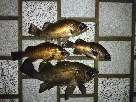 短時間の釣行