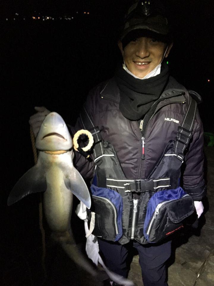 釣ったサメ
