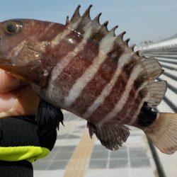 釣果 カンパリ 垂水の釣り情報・トップページ